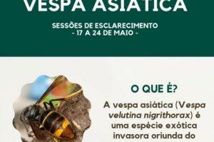 Vespa Asiatica-Destaque